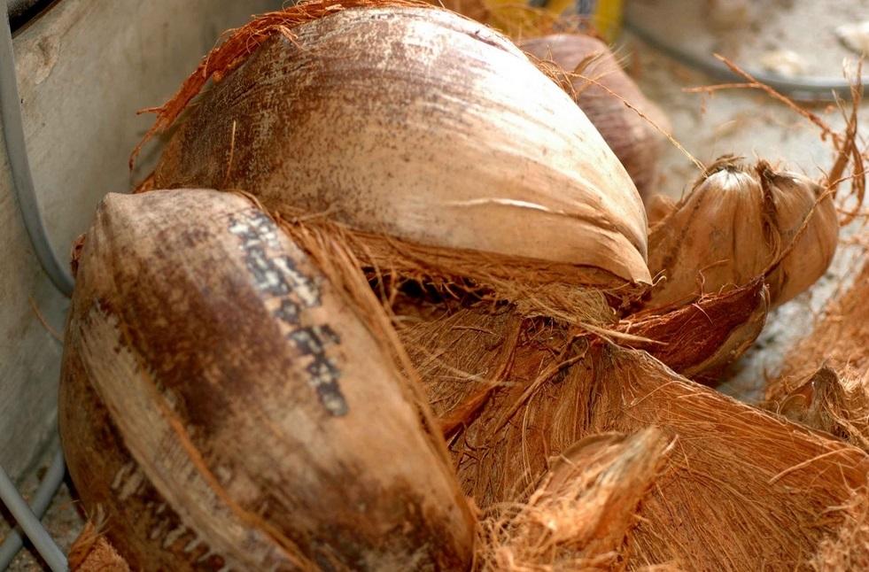 pupuk organik dari sabut kelapa